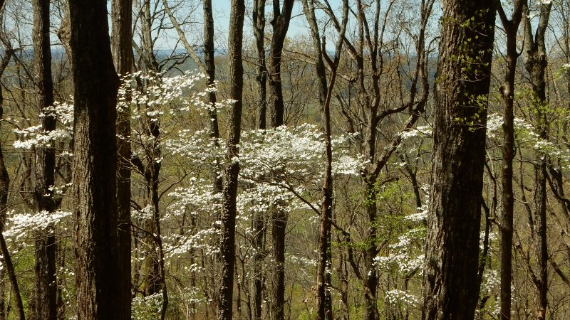 Johns Mountain: A Georgia Mountain Treasure